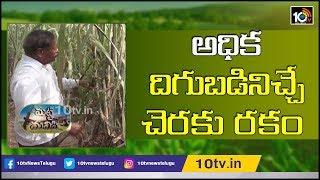 అధిక దిగుబడినిచ్చే చెరకు రకం   Earn High Profits With These Varieties in Sugarcane Cultivation