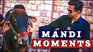 Mandi Moments By Peshori Vines Official