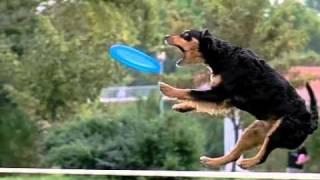 Czech Dogfrisbee Championship 2011 - slow motion movie by www.DogSports.cz