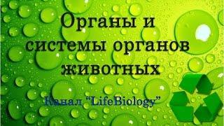 Органы и системы органов животных