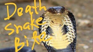 On The Spot Death | Cobra Handler Vikram Maluat of Punjab.