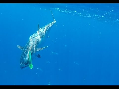 Marion Reef Fishing Video!!  Awesome Day 2!!  Coral Sea!!