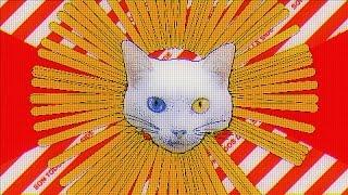 MISERERE - Gato Ladrón de Papafritas