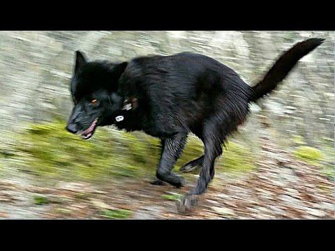 Dogs Roll In Dead Fish Hike (#3)