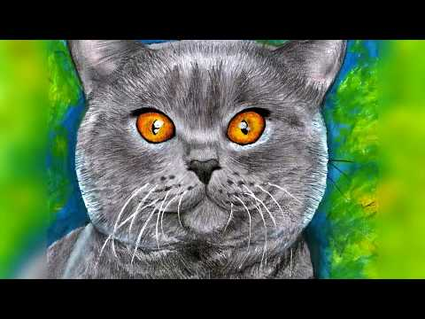 Dibujo de un gato británico pelo corto gris | Drawing a British Shorthair