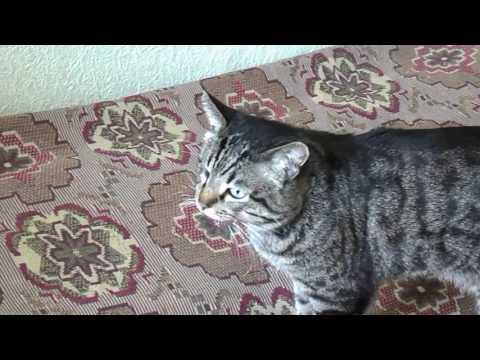 Сколько лет живут кошки в домашних условиях и от чего