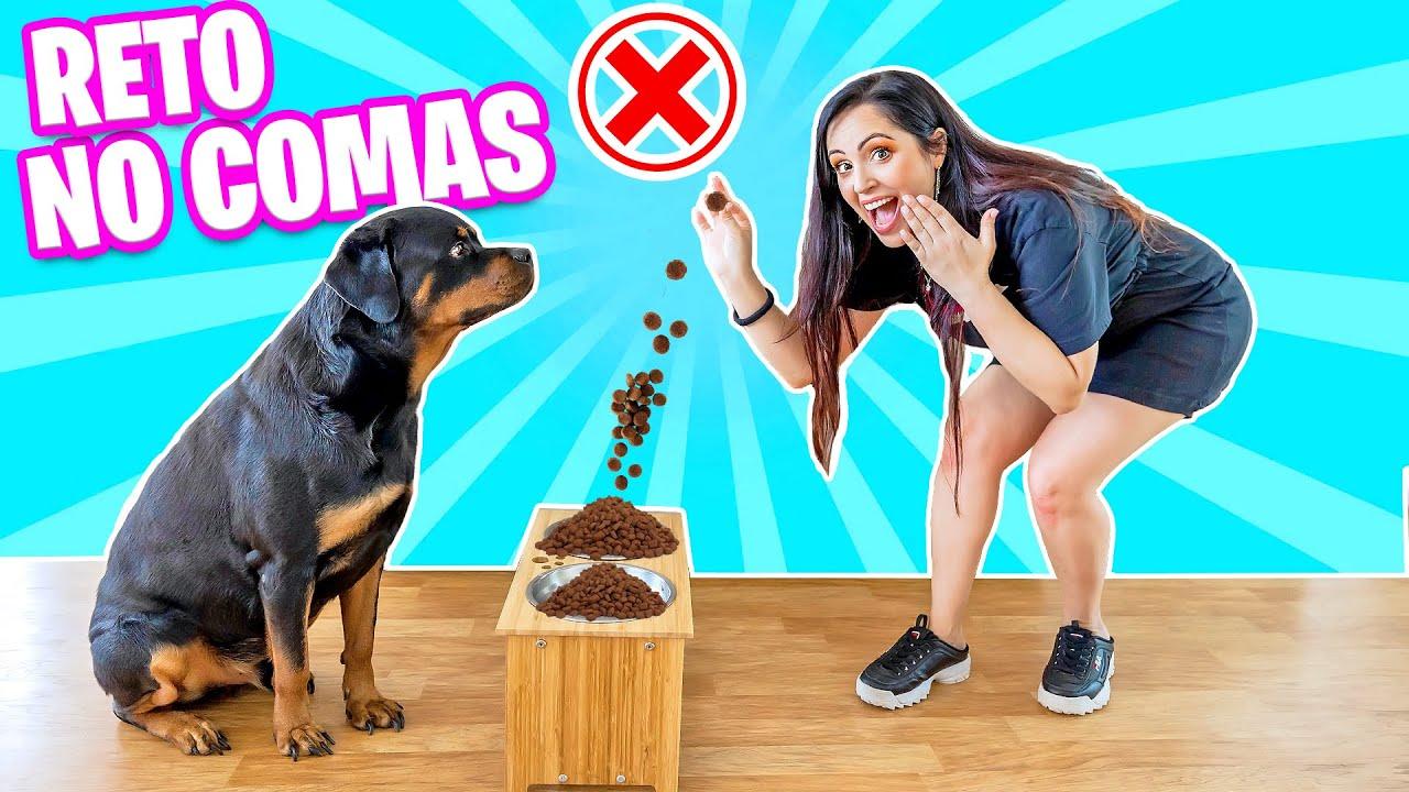 PROBANDO RETOS VIRALES de INTERNET con mi PERRO! 😅 Viral Dog's Challenges! 😂 SandraCiresArt