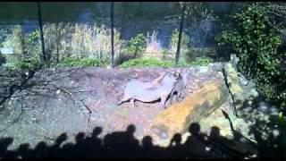 animal sex (warhog)