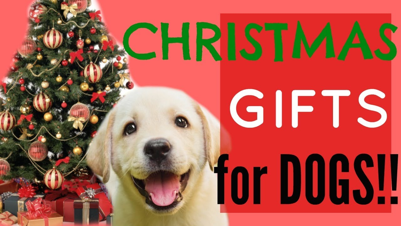 Christmas gifts for dogs - YouTube