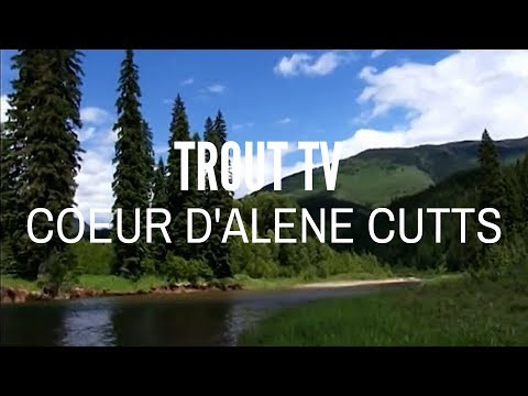 Trout TV - North Fork Of The Coeur D'Alene Fly Fishing