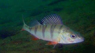 Бирюсинская рыбалка - 2