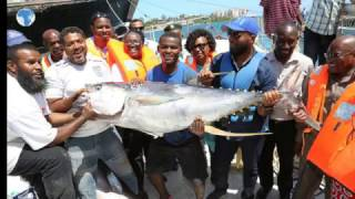 Bumper fish harvest with MV Mombasa 001