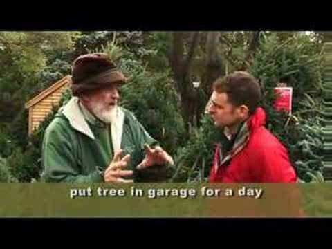 Caring For A Live Christmas Tree