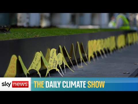 The Daily Climate Show: Should we stop flying?