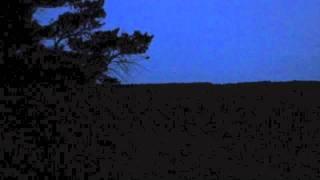 Caprimulgus europaeus  - Ziegenmelker / Nightjar Sounds