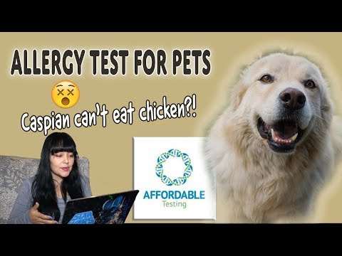 How To Find Out If Your Dog Has Food Allergies | Hair Testing