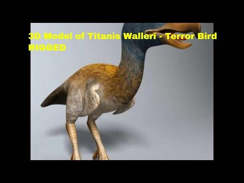 3D Model of Titanis Walleri - Terror Bird RIGGED