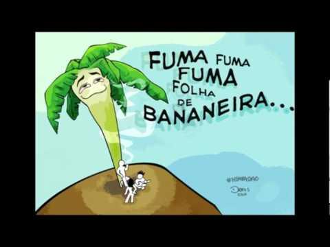 musica do armandinho fuma folha de bananeira