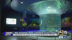 OdySea Aquarium opens Saturday in Scottsdale