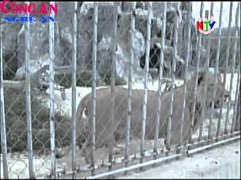 Nỗ lực phòng chống buôn bán động vật hoang dã