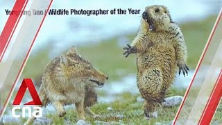 Image of fox startling marmot wins top wildlife photography prize