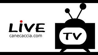 LIVE  Streaming  Bluorobica Bergamo - Mazzoleni BT Pizzighettone