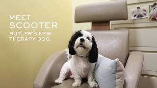 Meet Scooter, Butler's New Therapy Dog | Butler Stories
