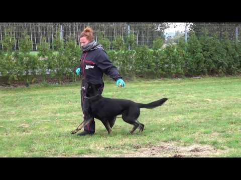 wezyr-german-shepherd-obedience