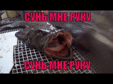 РЫБА МОРСКОЙ ЧЕРТ / ОПАСНАЯ РЫБА / MONKFISH