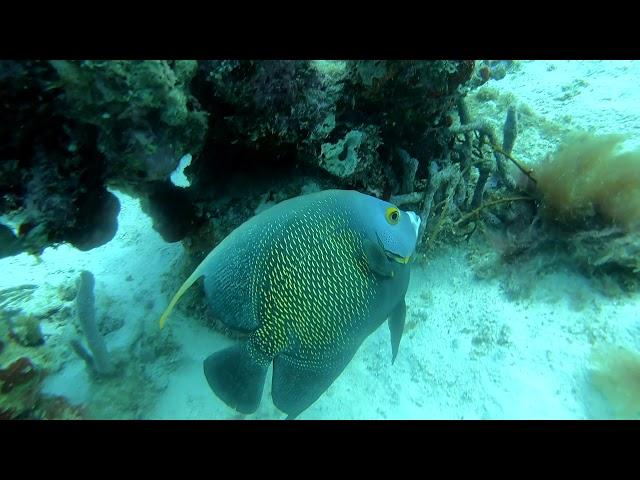 OCEANLIFE IN ARUBA