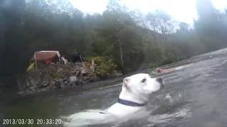 under water  Gopro Dogs swimming