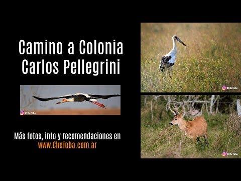 Camino a Carlos Pellegrini, Esteros del Iberá