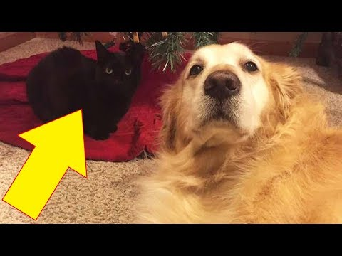Heartbroken Cat Who Lost His Canine BFF Diss His Old Collar And Rejoices
