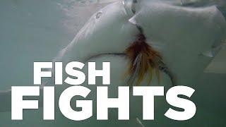 Fly Fishing for Lemon Sharks