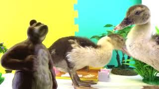 Перелетные утки в гостях у Маши и Мишки     Бабушкины Сказки