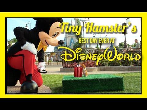 Thumbnail Tiny Hamster's Best Day Ever at Walt Disney World