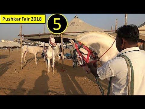 Dancing Ghode : पुष्कर मेला Pushkar Fair Mela Horse Market 2018 : Indian Ghoda Bazar : Trading ...