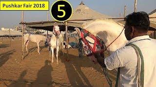Dancing Ghode : पुष्कर मेला Pushkar Fair Mela  Horse Market 2018  Raju Ustad From  Bhilwara