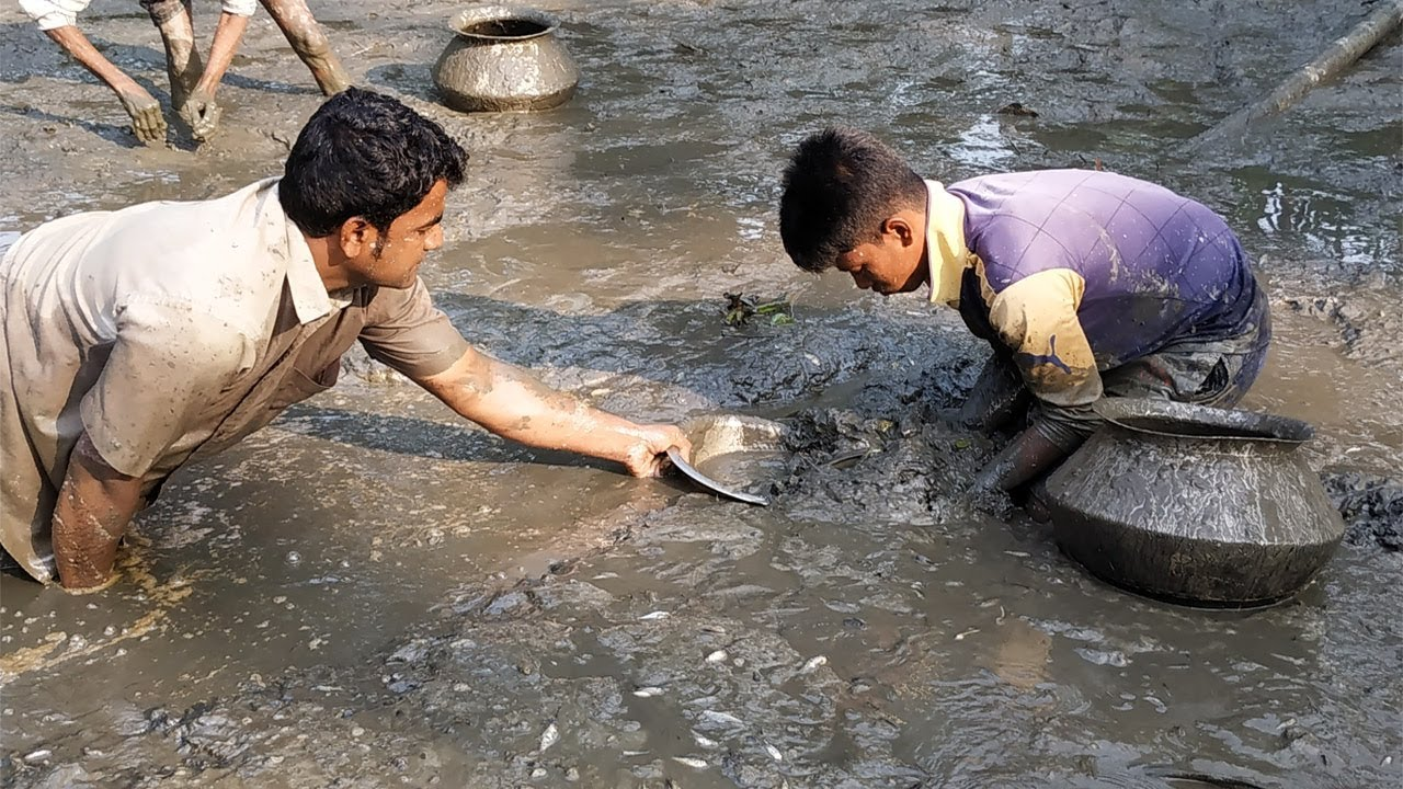 Download People lot of fish catching in muddy water pond by hand || Village Fishing trap Video (Part-17)
