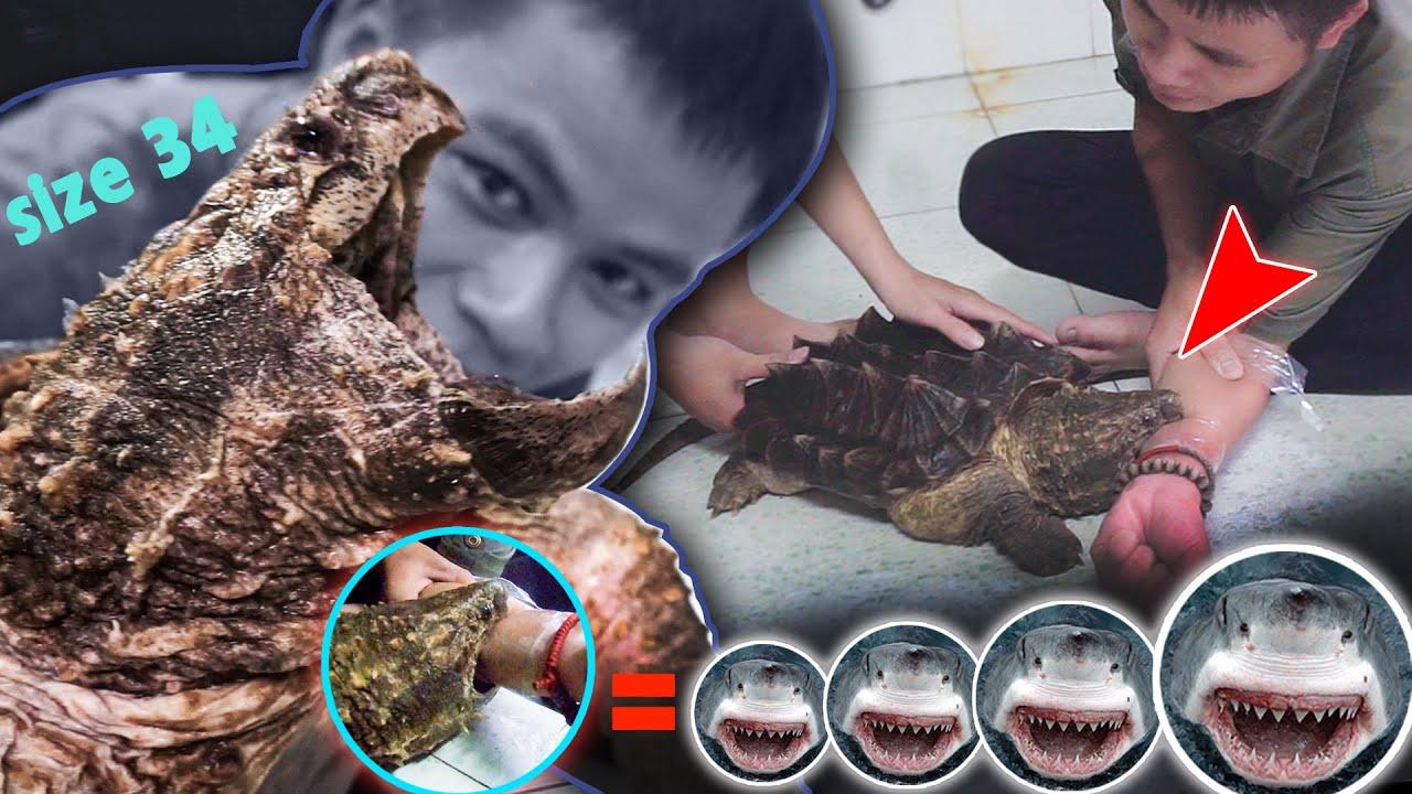 Thử LỰC CẮ|N Rùa Cá Sấu Size 34 | Lực Gấp 4  Lần Cá Mập Trắng ?【Hie】