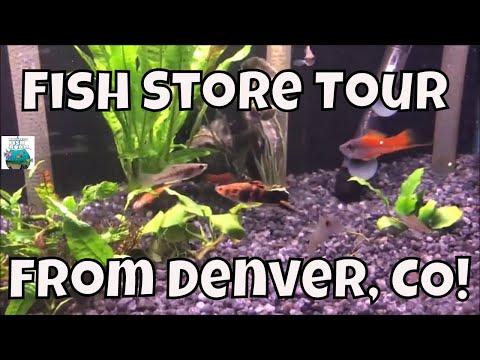 Fish Den Fish Store Tour Old School Fish Store!
