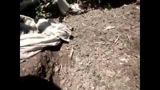 Как ускорить созревание компостной кучи