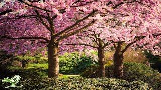 Peder B. Helland - Japanese Garden