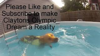 Swimming Dog! Michael Phelps of Dogs! Dog Training for the Olympics!
