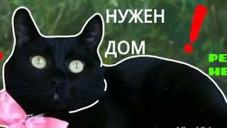 """ПРИЮТ """"ЛУЧШИЙ ДРУГ""""! г.Тюмень!!"""