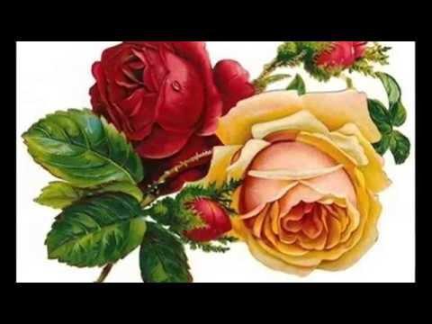 Róże To Piękne Kwiaty,ale Czerwone  Są Najpiękniejsze
