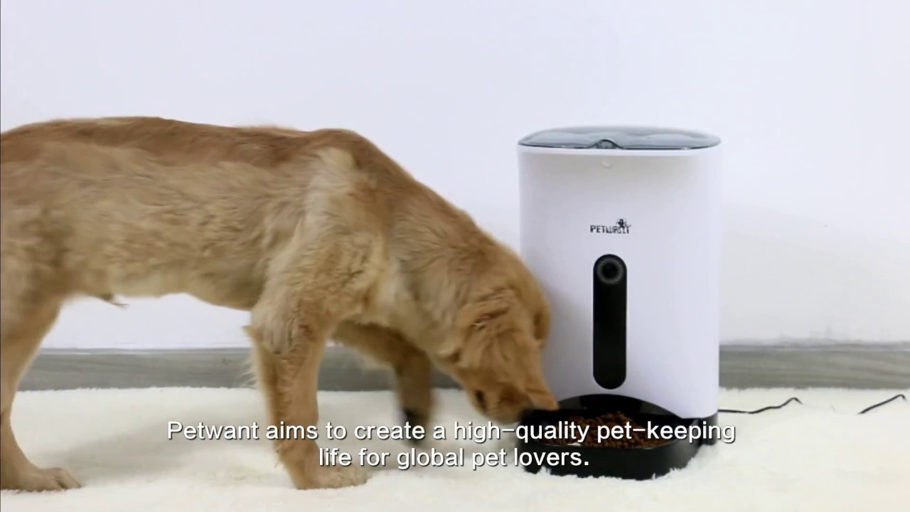 for babadios feeder feeders pet dogs review read s automatic babadio must