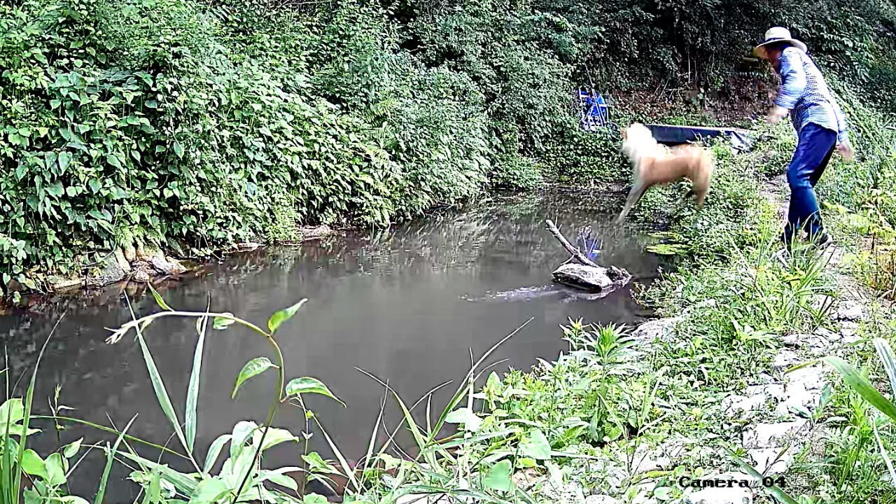 CCTV에 연못 침입자가 나타났다. 연못에 그걸 왜 던져? Pond intruder.