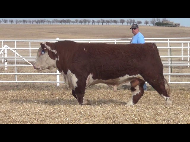 Express Ranches Lot 218