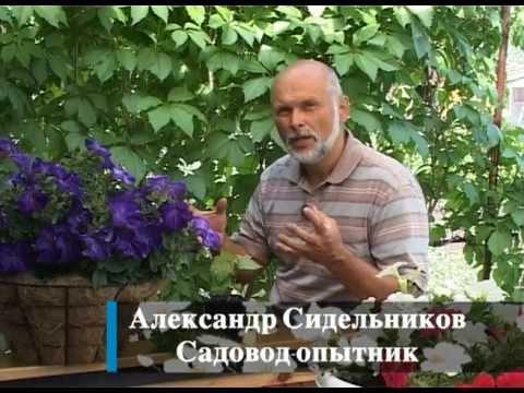 видео: Зеленое черенкование
